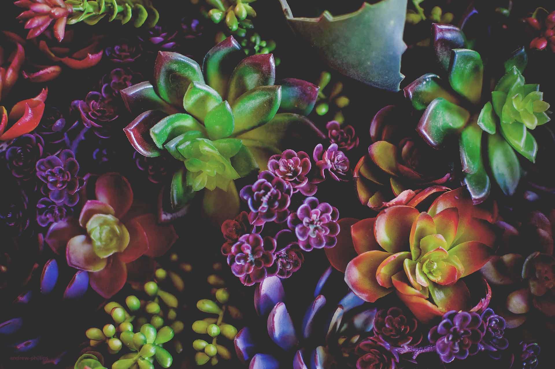 Trauer Beerdigung Bestattung Floristik Kranz Strauss Blumen