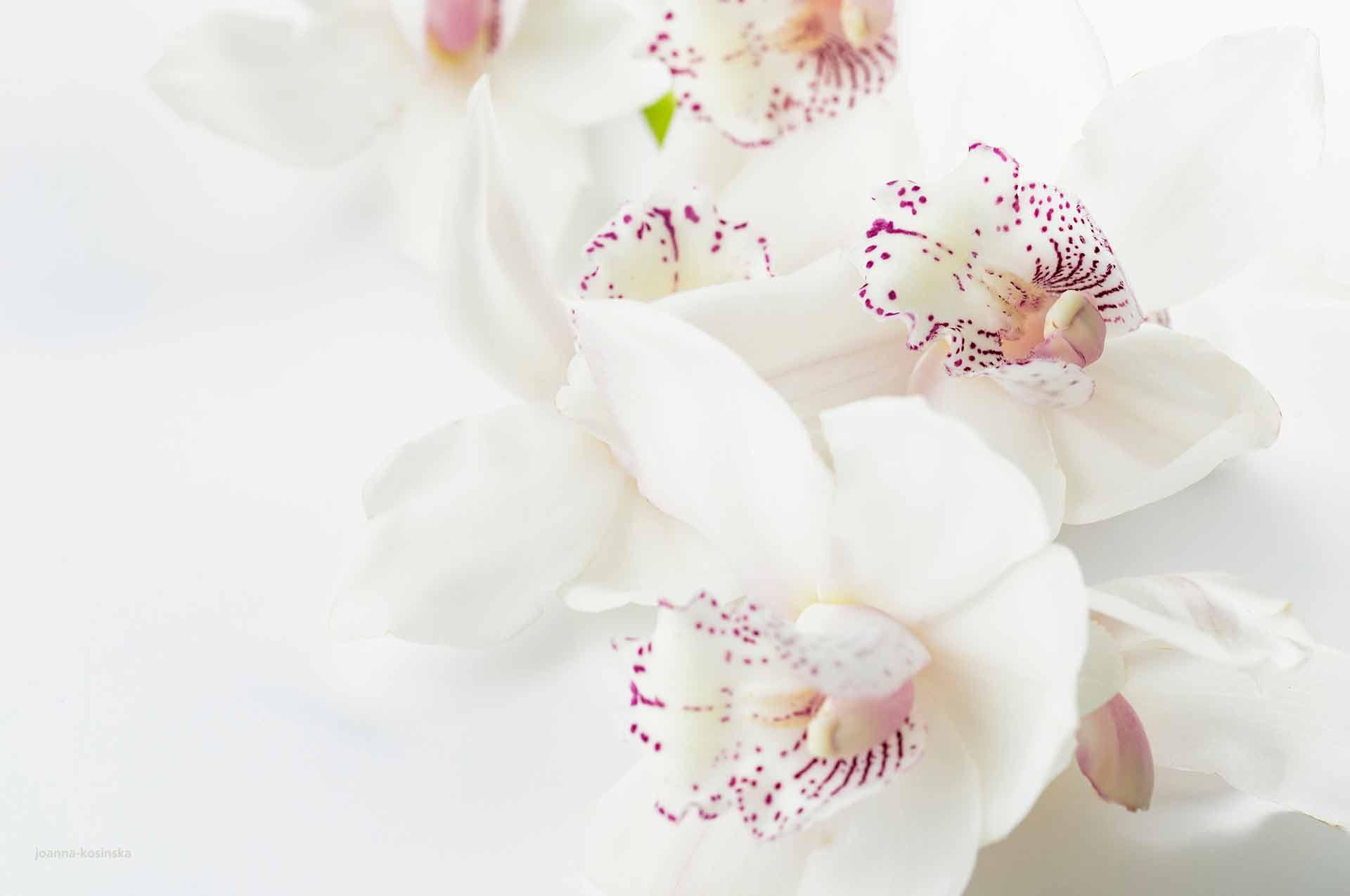 Kein Problem: Blumengeschenke Können Sie Im Blumenhaus Sass Auch Online  Bestellen Und Liefern Lassen. Wir Liefern Alles Innerhalb Von Einem Radius  Von 25 Km ...