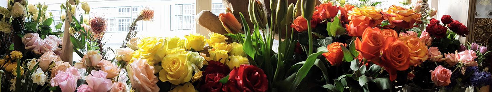 Blumenhaus Sass grosses Angebot an Blumen, Pflanzen und Accessoires